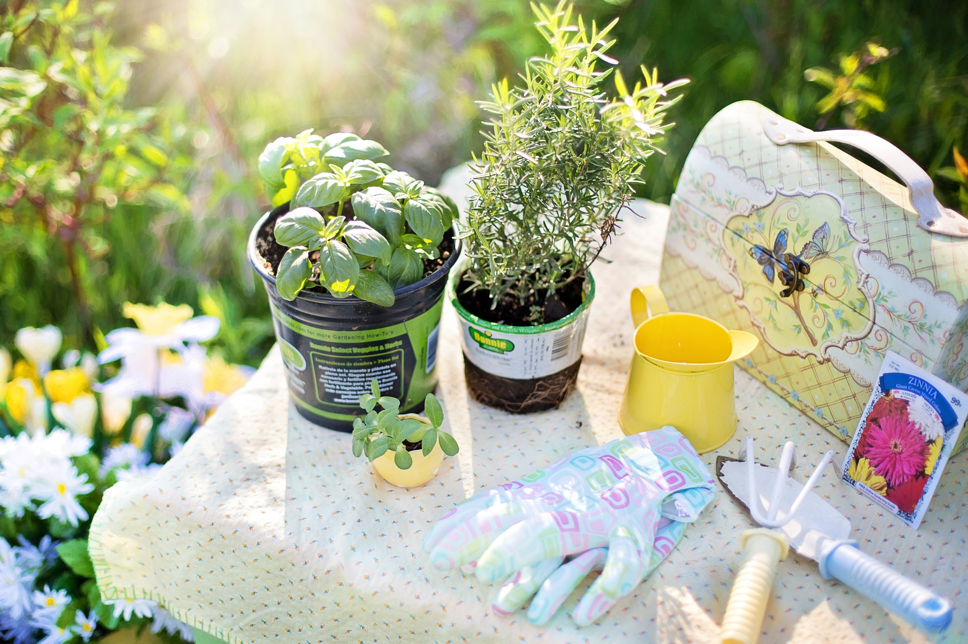 Potted herbs sitting on a table next to garden gloves
